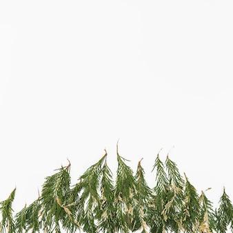 Pilha de galhos de plantas delicadas