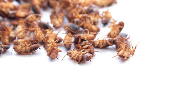 Pilha de insetos baratas mortas, isolado na vista superior de fundo branco. copie o espaço