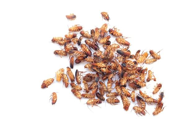 Pilha de insetos baratas mortos isolados na vista superior de fundo branco