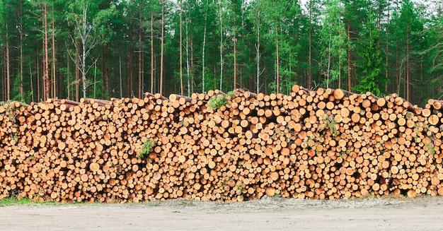 Pilha de lenha de troncos de pinheiro recém-picados