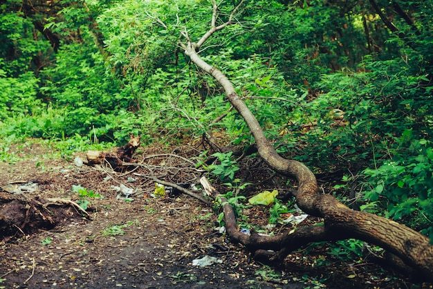 Pilha de lixo na floresta entre plantas.