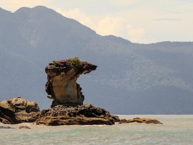 Pilha de mar cobrahead no parque nacional de bako, bornéu na malásia