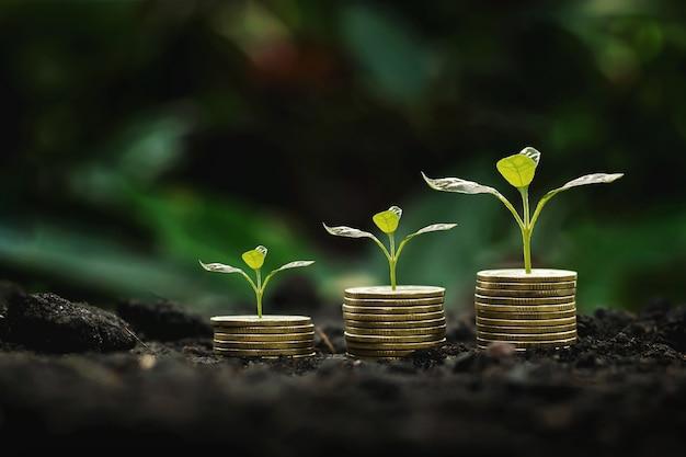 Pilha de moedas com planta de crescimento em passo e fundo de luz do sol. conceito de economia de dinheiro