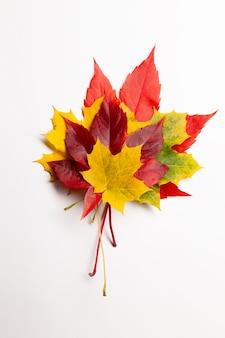 Pilha de muitas folhas coloridas de bordo de outono