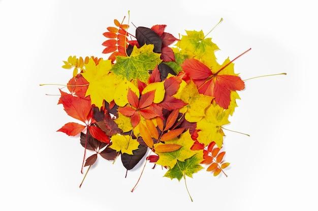 Pilha de muitas folhas coloridas de outono, fundo de textura
