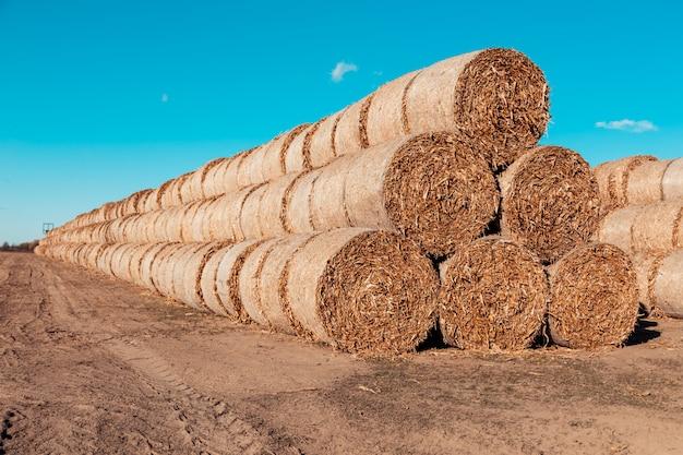 Pilha de palha enorme de fardos de rolo de feno no campo colhido contra um céu azul