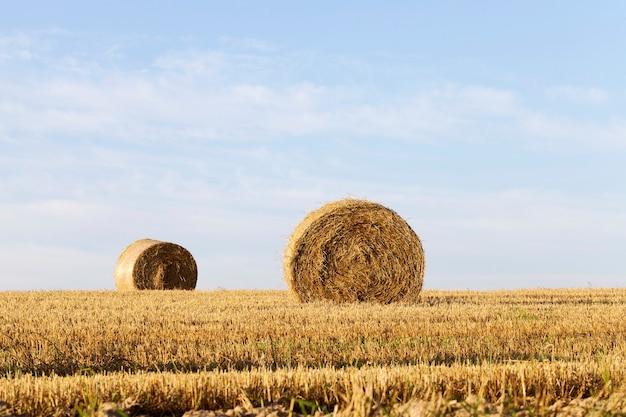 Pilha de palha no campo na linha do horizonte. paisagem de céu azul de verão