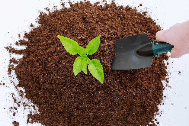 Pilha de terras férteis em um fundo branco. plantando pimenta em potes plásticos