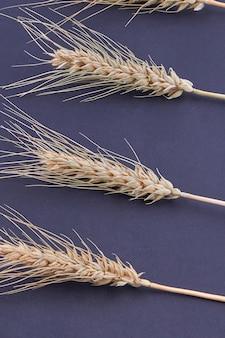 Pilha de tiro vertical de grãos de cereais isoladas em fundo preto. espiguetas de trigo ou centeio de close-up. Foto Premium