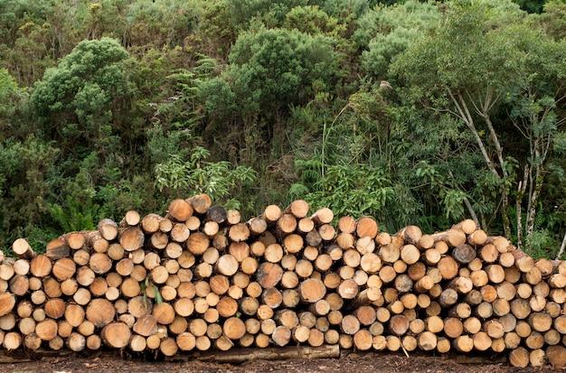 Pilha de toras de madeira empilhadas, madeira serrada ou conceito de indústria de madeira