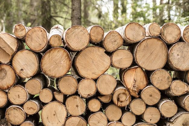 Pilha de toras de madeira pronta para o inverno