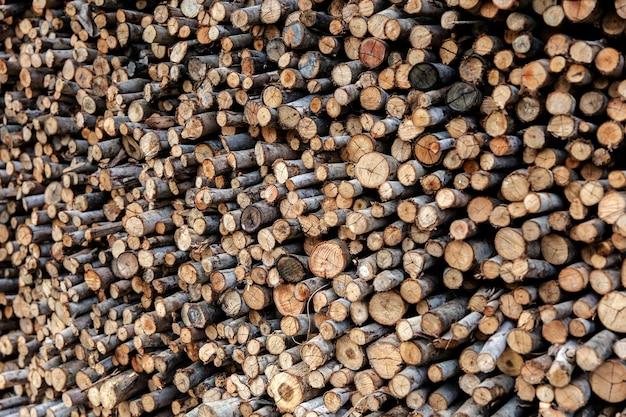 Pilha de troncos de árvores