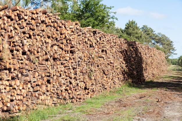 Pilha de troncos de pinheiro corta
