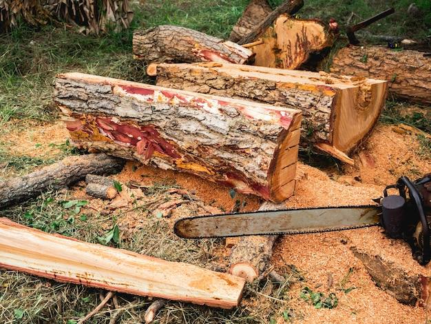 Pilhas de árvore grande, toras cortadas por motosserra com serragem no chão.