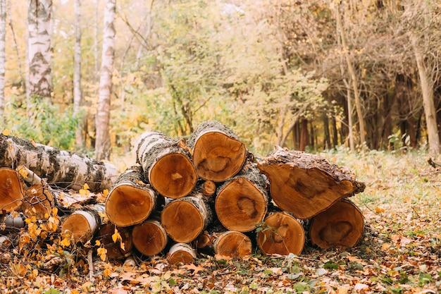 Pilhas de lenha pilha de lenha madeira recém-lombada