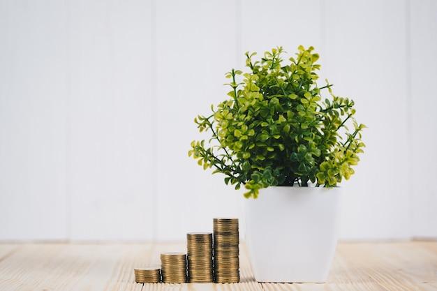 Pilhas de moedas e pequena árvore em vaso