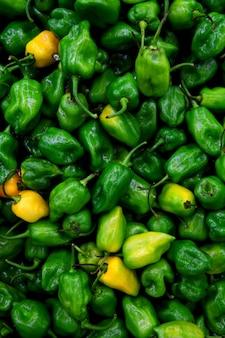 Pimentão habanero pimenta mais quente do mundo