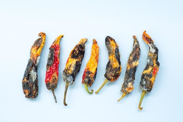 Pimentão podre velho com mofo na superfície cinza. conceito de doença fúngica vegetal.