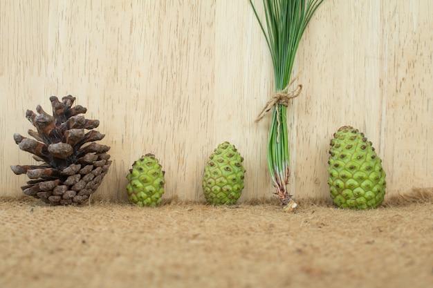 Pinecone fresco para fazer chá pinecone fresco.