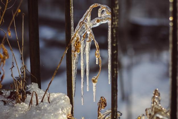 Pingando pingentes. pingentes de gelo de água pendem de um feixe de ferro