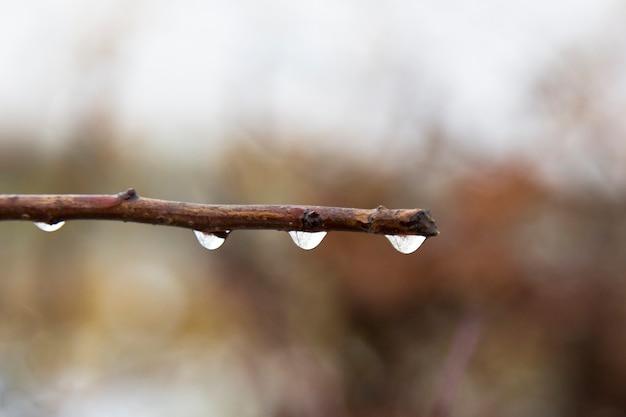 Pingos de chuva em um galho no outono. profundidade superficial de campo. fundo desfocado