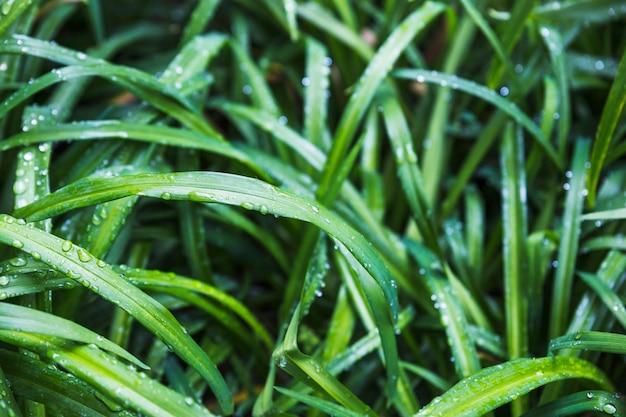 Pingos de chuva na grama do jardim