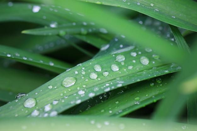 Pingos de chuva nas folhas verdes