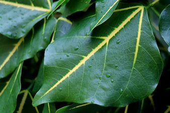 Pingos de chuva no verde profundo com folhas de árvore de sotaque amarelo