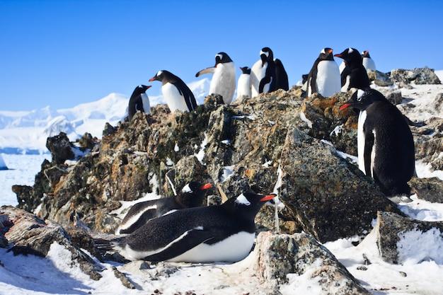 Pinguins em uma paisagem de inverno