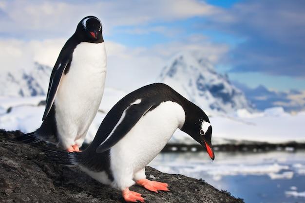 Pinguins na antártica