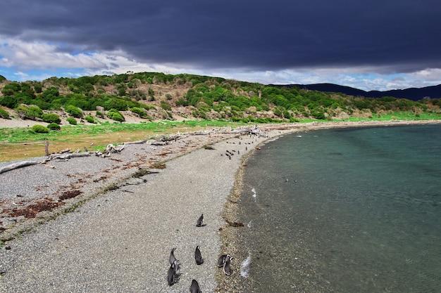 Pinguins na ilha do canal de beagle fecham a cidade de ushuaia, terra do fogo, argentina