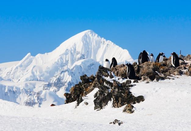 Pinguins nas rochas