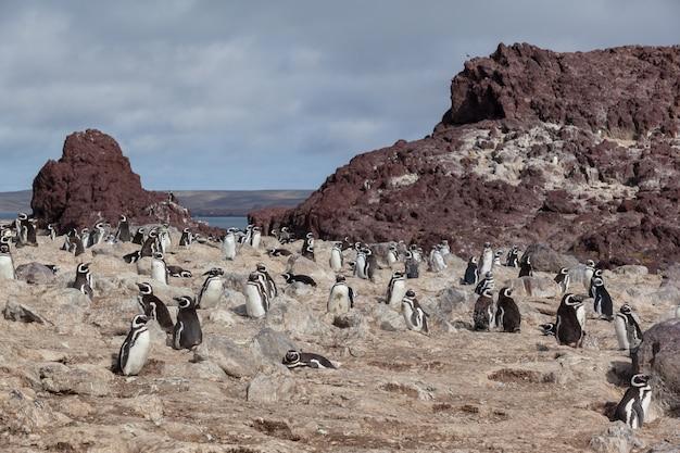 Pinguins sentados na praia rochosa