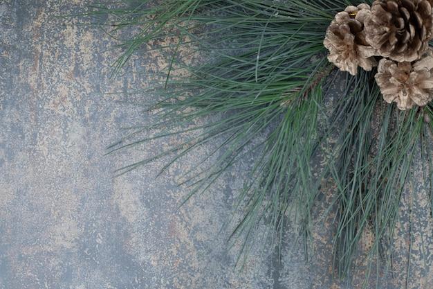 Pinhas pequenas em um galho de árvore verde sobre fundo de mármore. foto de alta qualidade