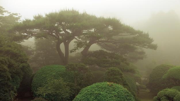 Pinheiro cênico e arbustos aparados em um jardim japonês enevoado no verão