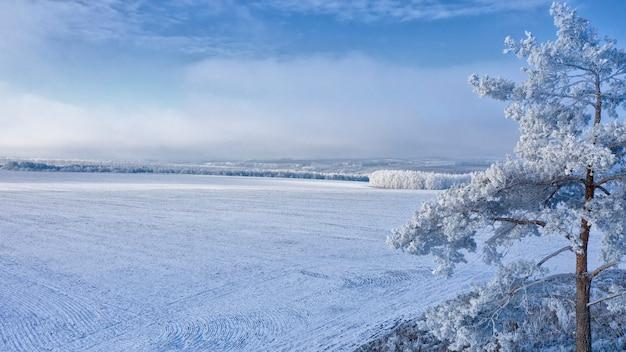 Pinheiro coberto de neve contra o fundo do campo de inverno e o céu azul do inverno