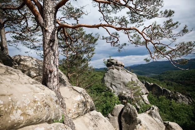 Pinheiro cresce no topo de uma rocha nas montanhas Foto Premium