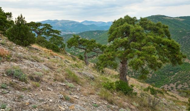 Pinheiro grande na colina de montanha de verão (reserva