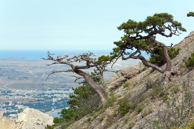 Pinheiro na colina de montanha de verão (crimeia, ucrânia, cidade de sudack).