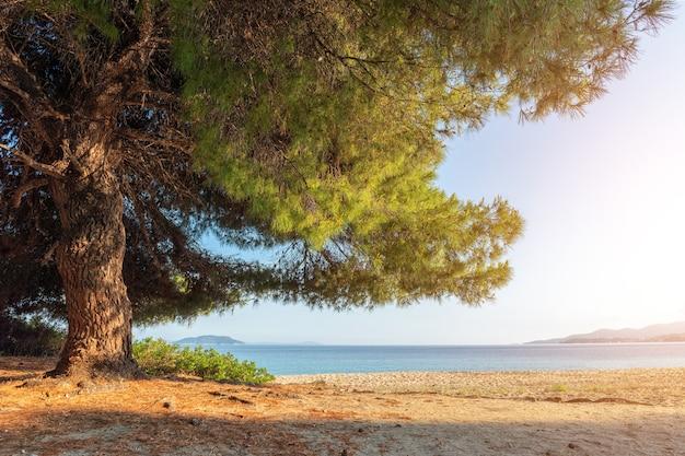 Pinheiro na praia com paisagem de sol