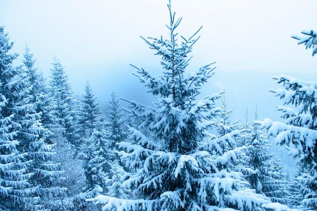 Pinheiro sob forte nevasca na floresta de inverno
