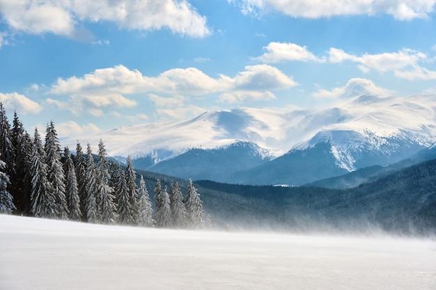 Pinheiros altos e perenes durante uma forte nevasca na floresta de montanha de inverno em um dia frio e brilhante.