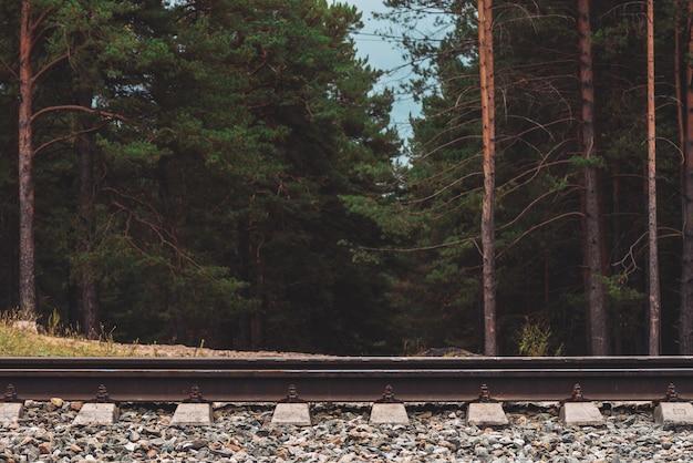 Pinheiros altos na escuridão close-up. fundo dos limites da floresta de pinheiros. textura de pinery atrás da estrada de ferro. arvores coníferas. paisagem ferroviária atmosférica.