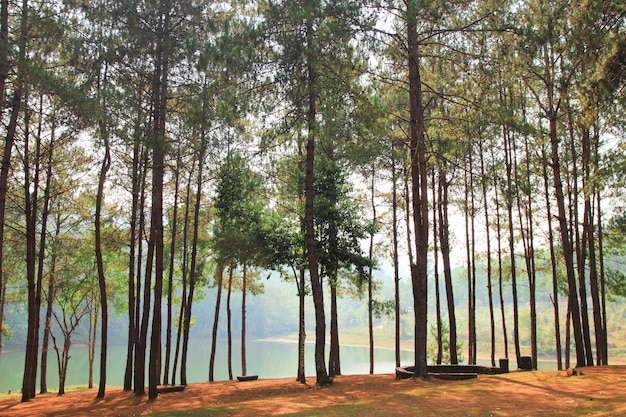 Pinheiros ao lado de um lago.
