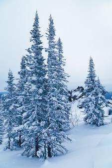 Pinheiros cobertos de neve azul em tons com espaço de cópia