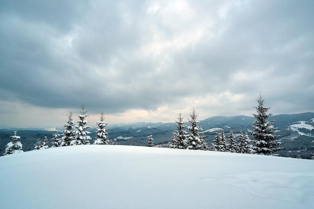 Pinheiros cobertos de neve fresca caída na floresta de montanha de inverno na noite fria e sombria.