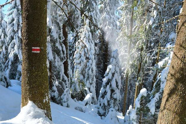 Pinheiros com marcações de direção vermelhas para caminhantes cobertos com neve fresca caída na floresta de montanha de inverno em um dia frio e brilhante.