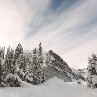 Pinheiros com montanhas no fundo do céu azul