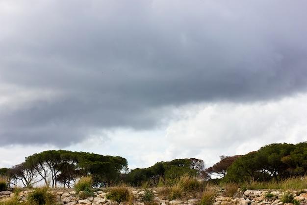 Pinheiros do sul sob um céu tempestuoso roxo com nuvens