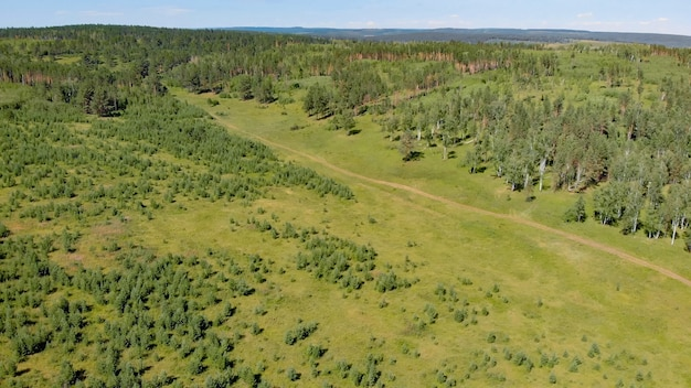 Pinheiros e florestas perenes cercam prados verdes que cobrem colinas sob o céu azul na vista aérea de verão do drone.